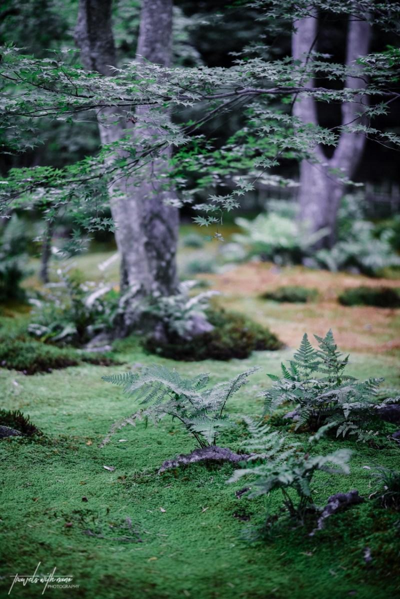 kyoto-secret-gardens-japan-10