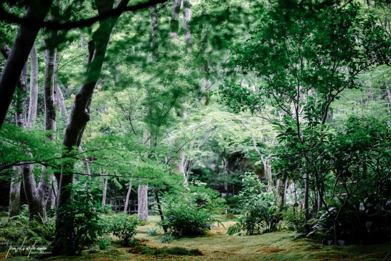 kyoto-secret-gardens-japan-15