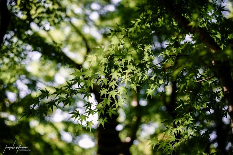 kyoto-secret-gardens-japan-36