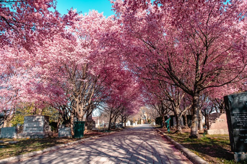 Best cherry blossom viewing spots in Washington, D.C, Virginia and Maryland.