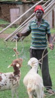 Photo of Xavier the farm hand with goats.