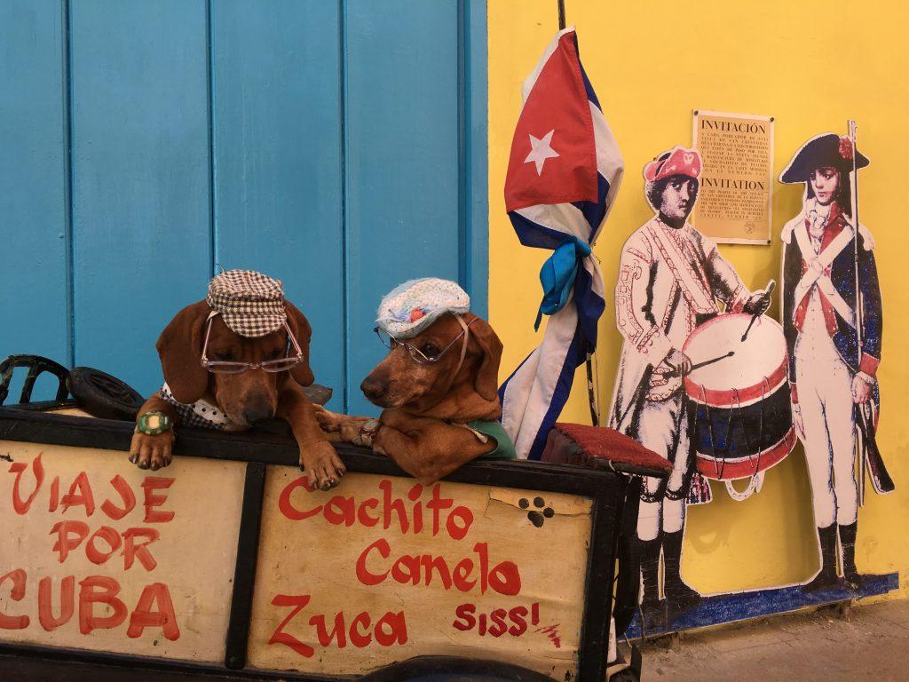 Trained dogs in Plaza de Armas in Havana when you visit Havana