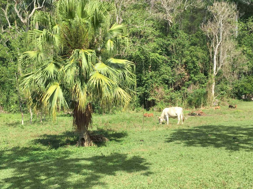 Countryside. Things to do in Viñales.