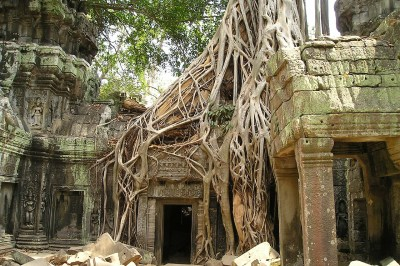 A large tree root encroaches on the temples in Angkor Wat