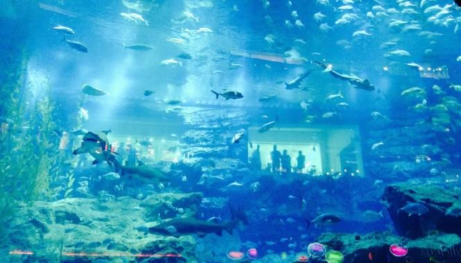 Dubai, mall, aquarium