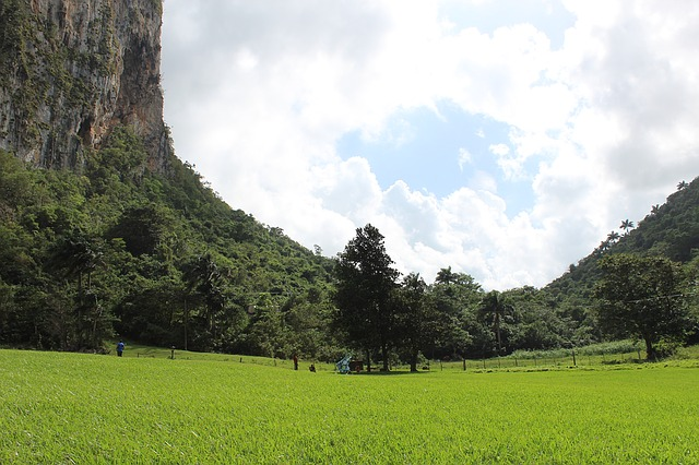 Mogotes rise high above the valley in Viñales.