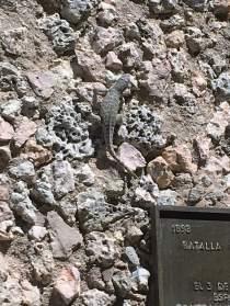 Lizard on wall of El Morro.