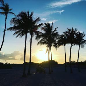 Sunrise, palm trees, South Beach