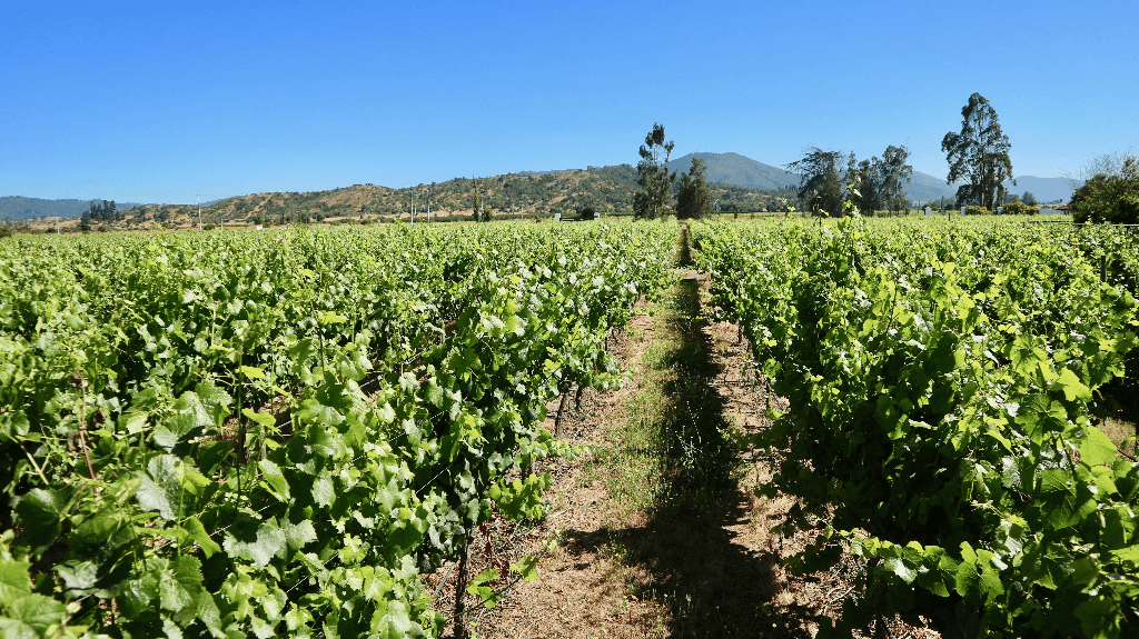 one of the most popular wine regions of the americas