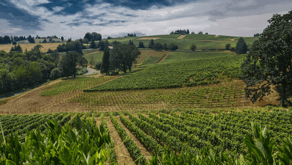 this is one of the great wine regions of the americas