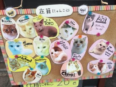 cat cafes japan experiences