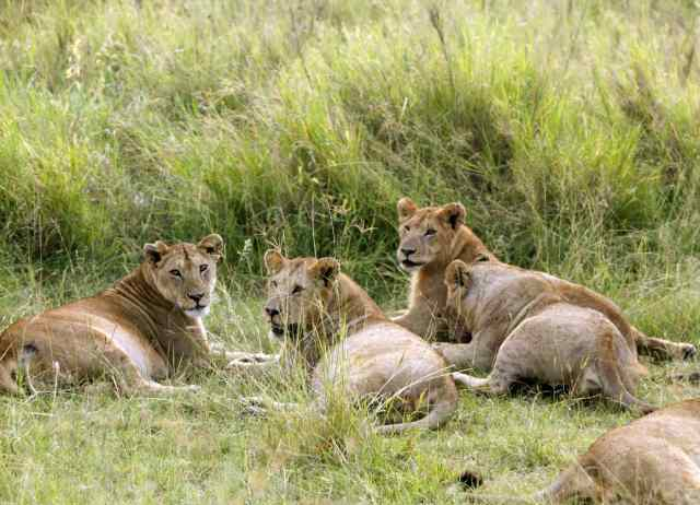 5 things to do on an African Safari, Africa, big cats, conservation
