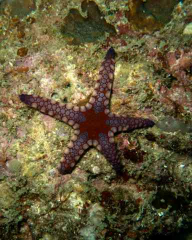 nr 14 sea star need id