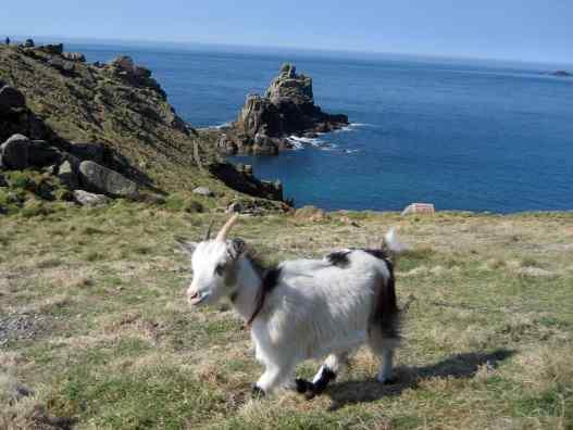 Such a cute little goat!
