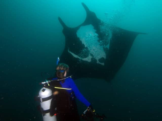 Incredible encounter with a Manta Ray