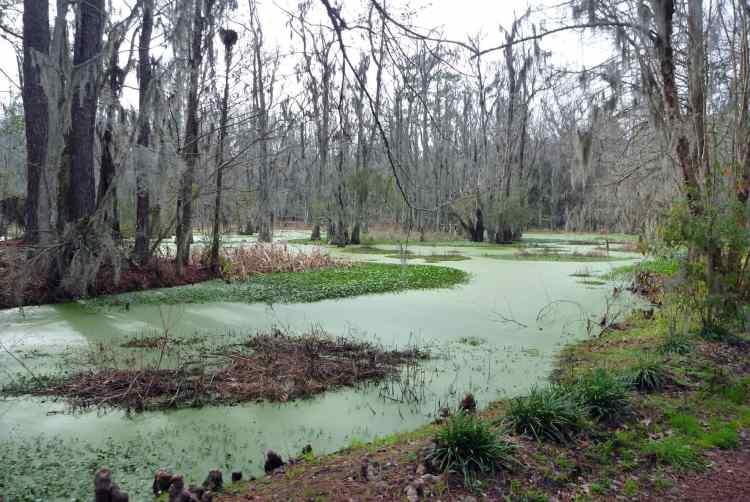chs 12 mag swamp