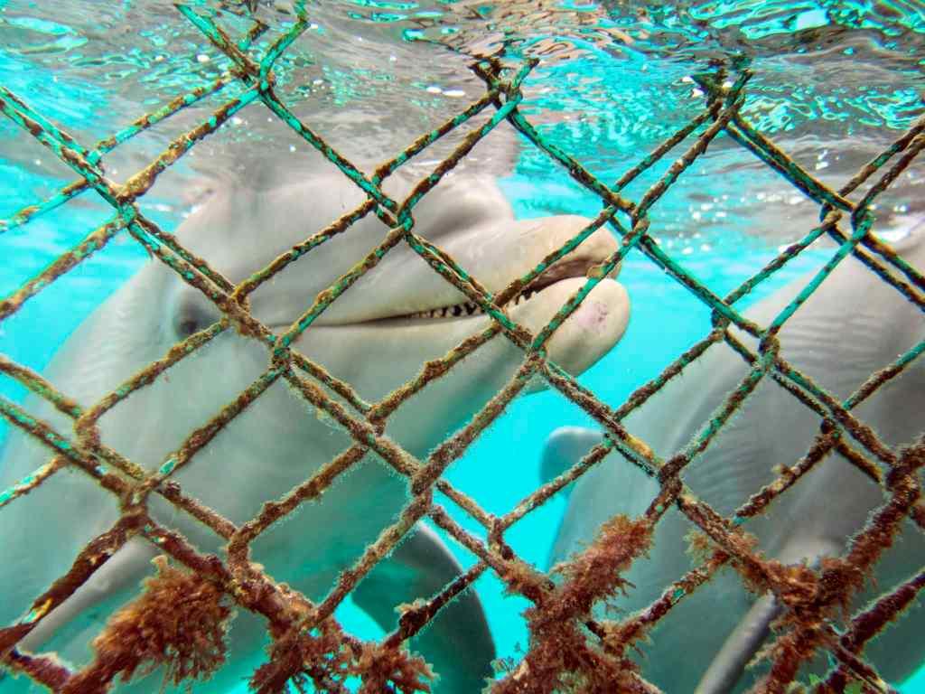 coz 13 snork dolphin smile