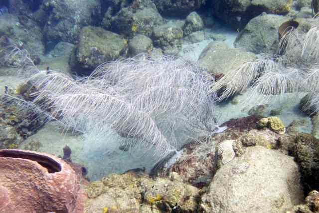 15 id soft coral