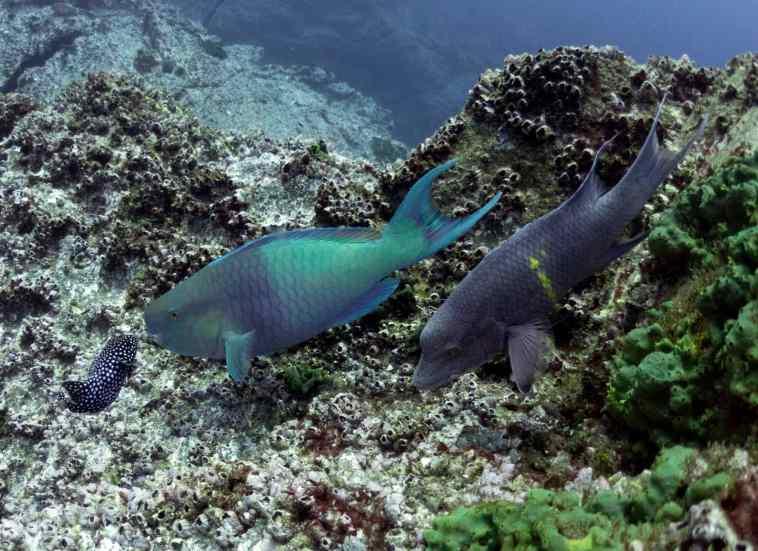 diving, scuba