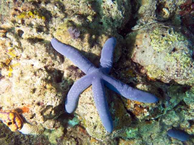 Angel Reef, Satonda, scuba, Arenui
