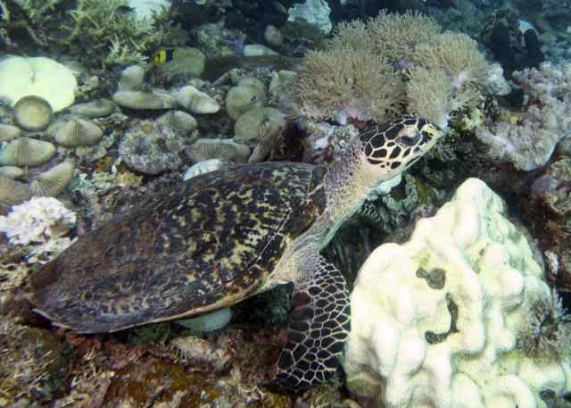 Komodo, scuba, diving, Arenui