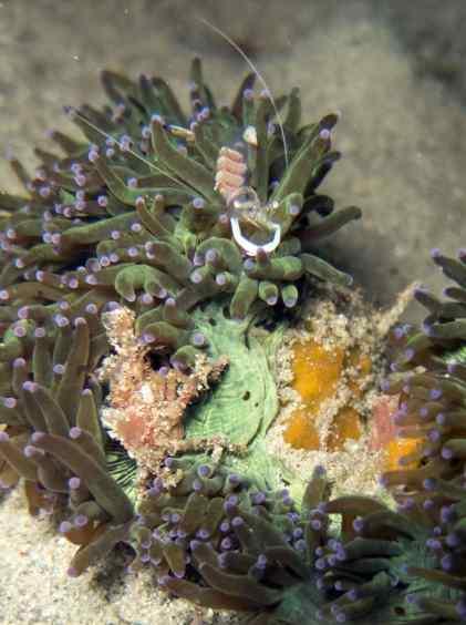 Night Dive, Scuba, Dive Trip, empty nest