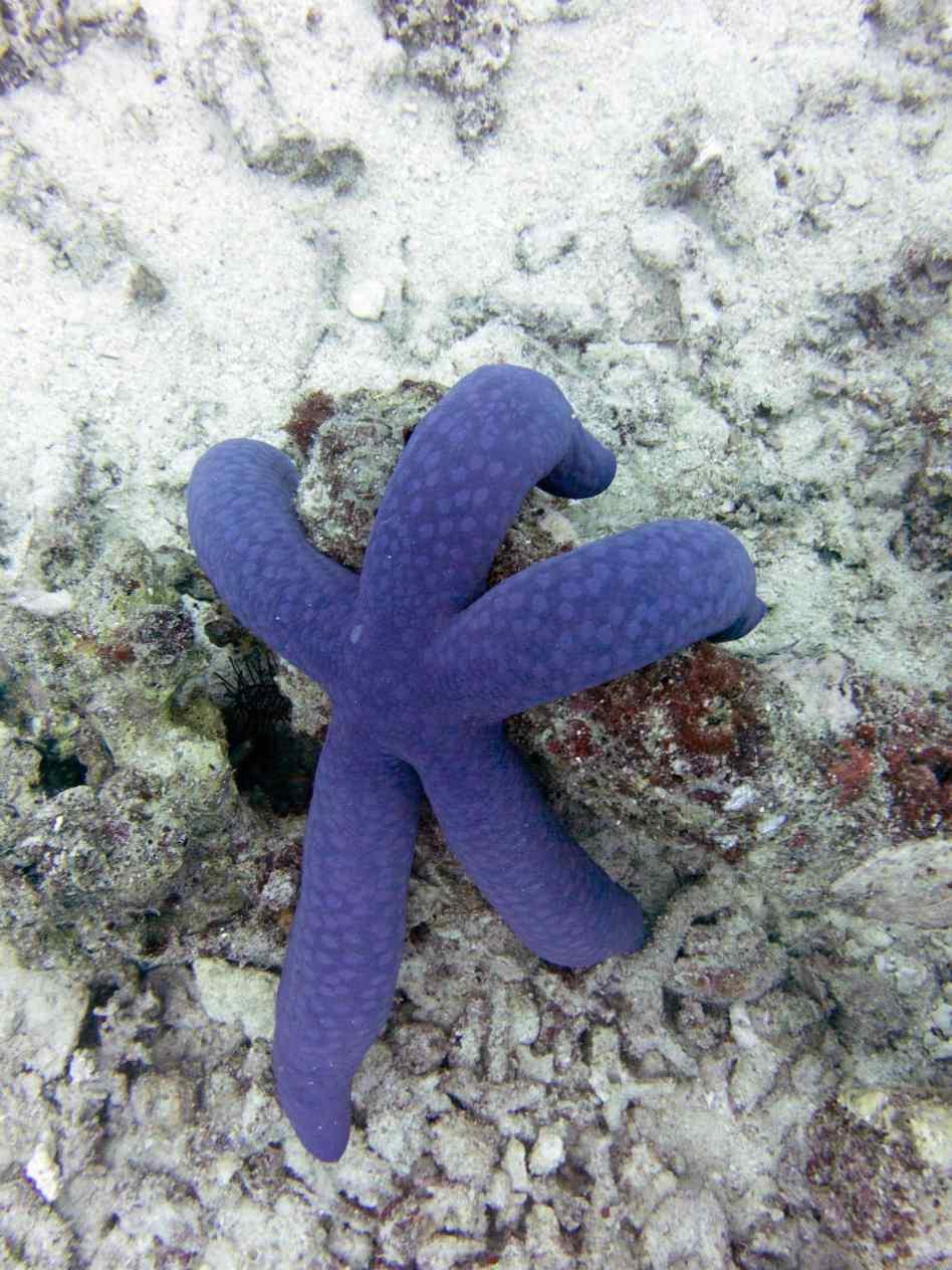Great Barrier Reef, Ribbon Reefs, Spirit of Freedom