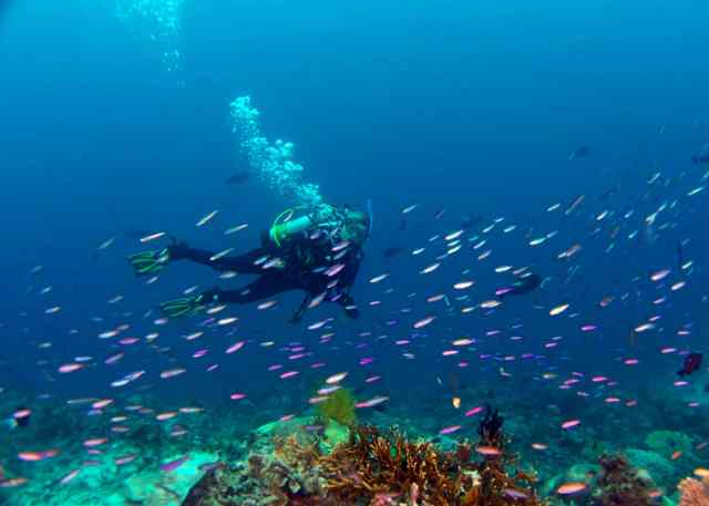 great barrier reef, spirit of freedom, scuba diving