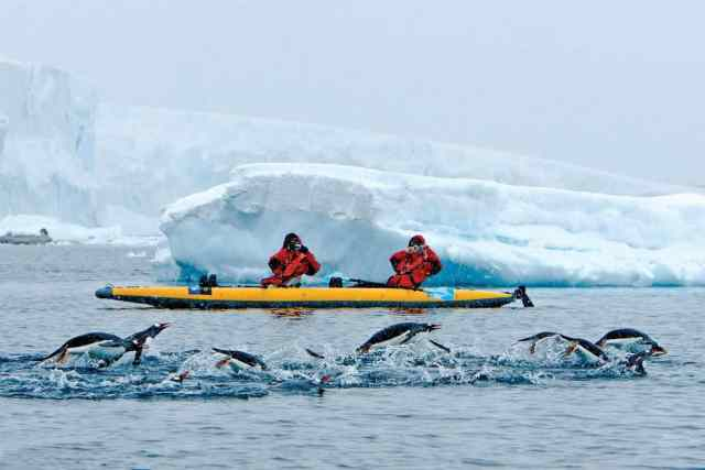 antarctica, penguins, gentoos, kayaking, whales