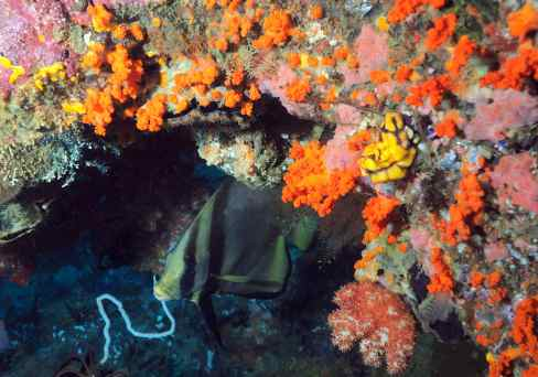 misool, diving, scuba, raja ampat, indonesia, the arenui