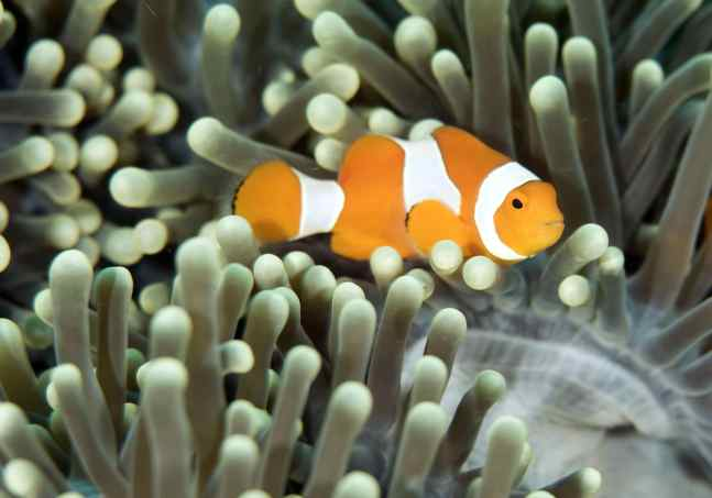 macro, photography, raja ampat, scuba, diving