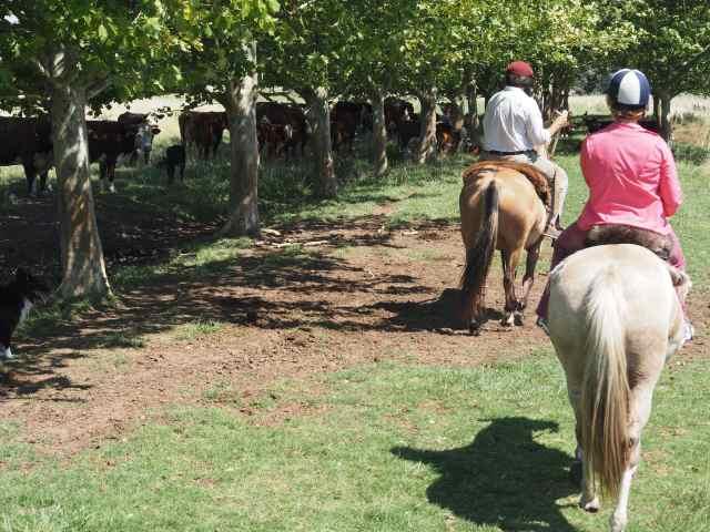estancia, ranch, buenos aires, El Candelaria del Monte
