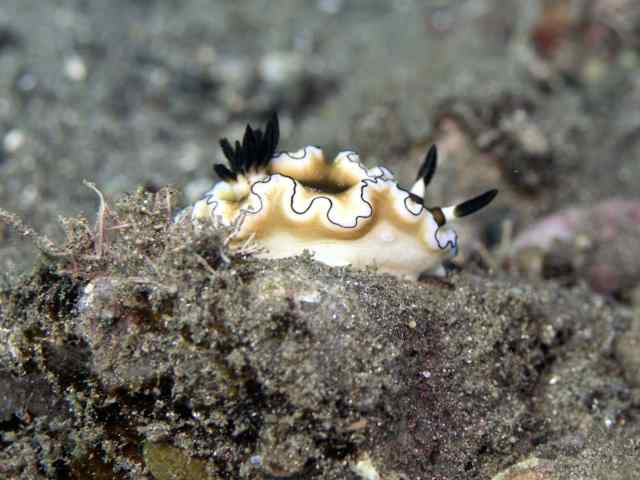 raja ampat, adventure, our planet, diving