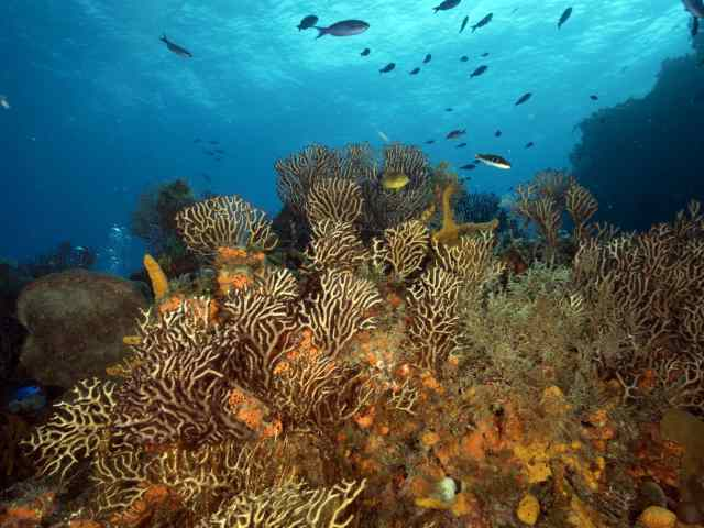 reefs, palancar, cedar pass, cozumel diving