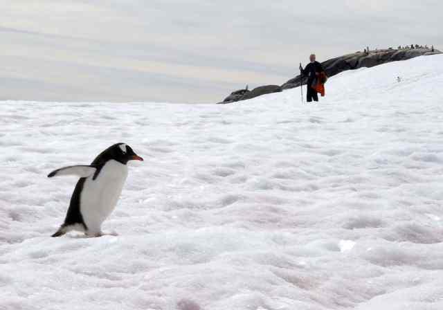 penguins, antarctica, africa