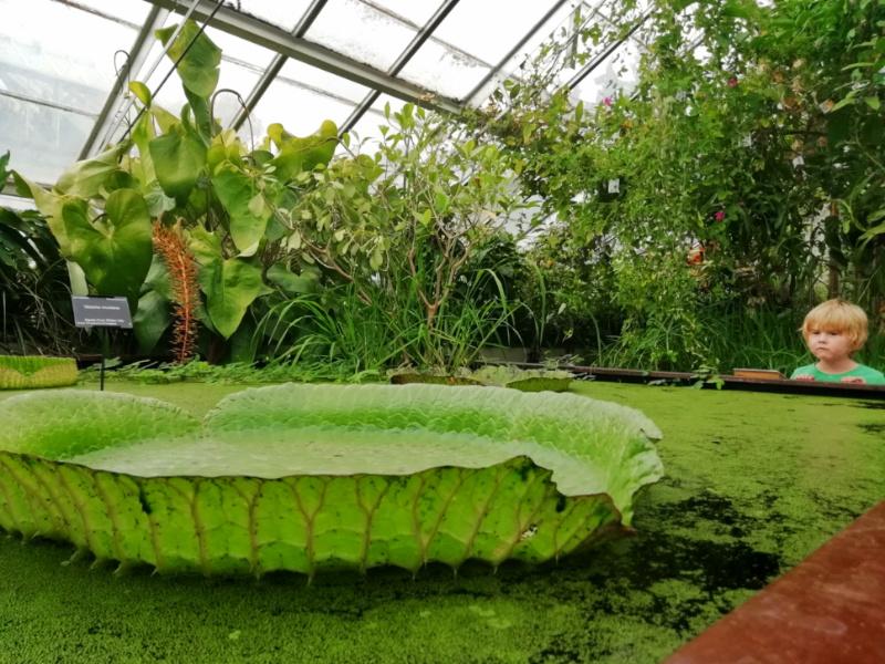 Cambridge Botanical Gardens