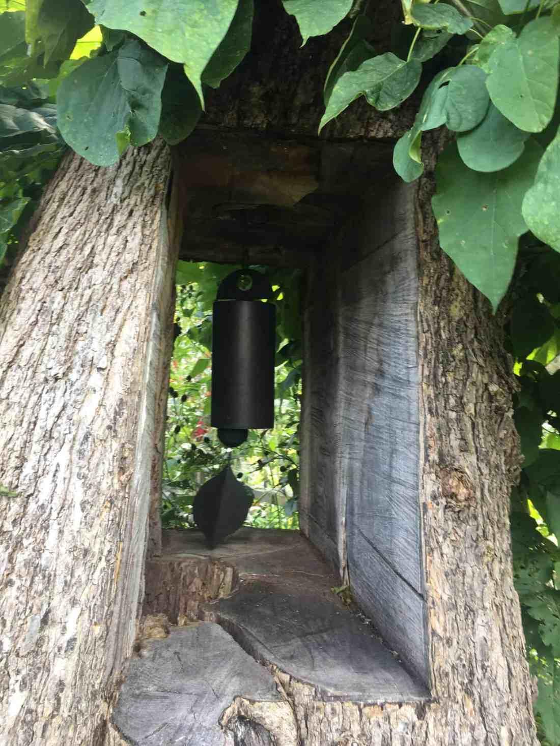 Cornell Botanic Garden tree
