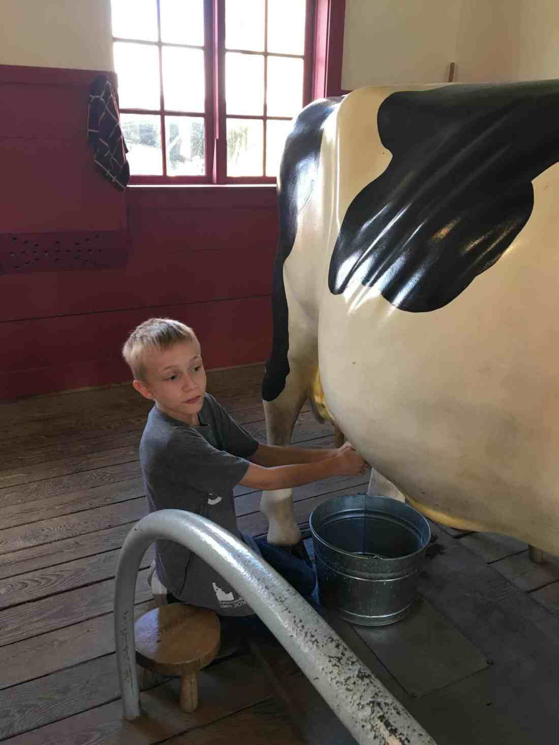 Hancock Shaker Village cow-0872