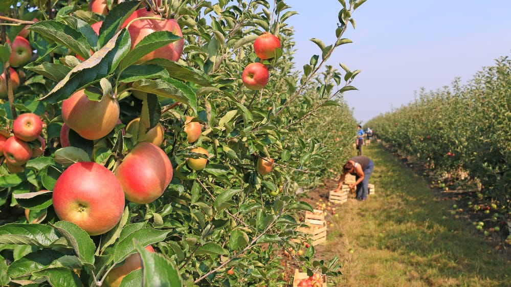 The Best Apple Picking in CT