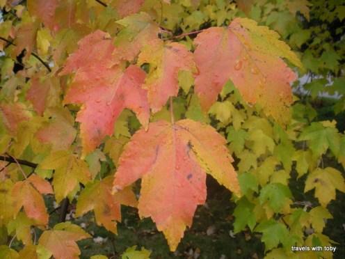 fall in Minnesota
