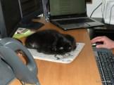 helping Dad work