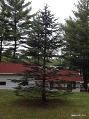 Miss M's tree