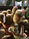 such an odd looking cactus