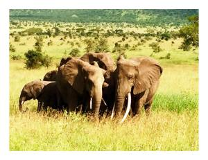 11225257_10153344705624493_8726458419717107808_n-300x231 Africa - Ngorongoro Crater