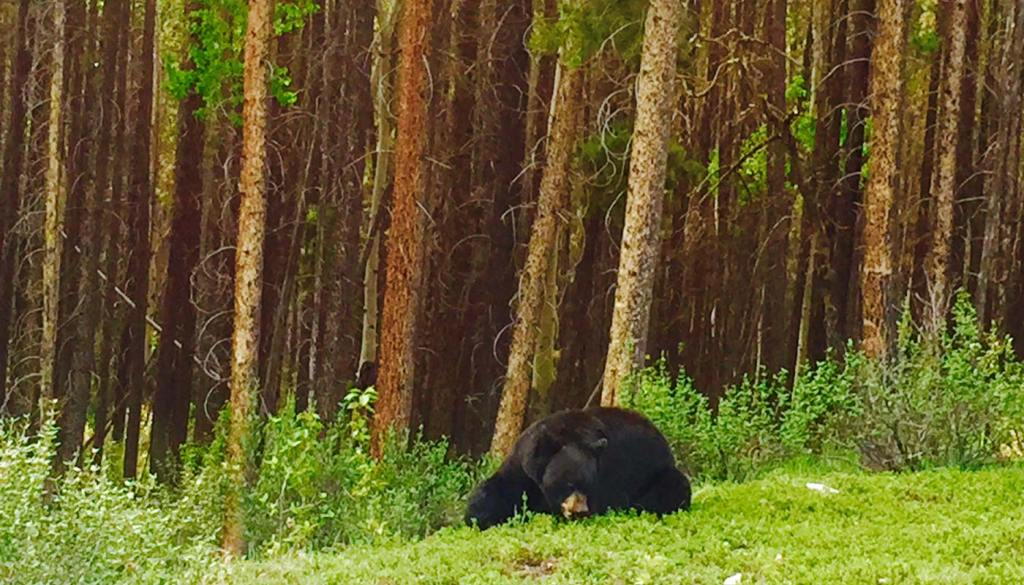 FullSizeRender2-1-1024x585 Banff: Bear, beaver and beer?