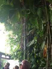 biosphere rainforest 3