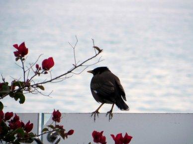 Bird in Qatar