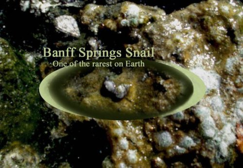 Banff Springs Snail