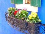 Burano Italy Flower box