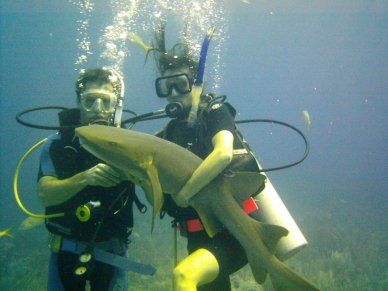 Scuba diving Belize with shark